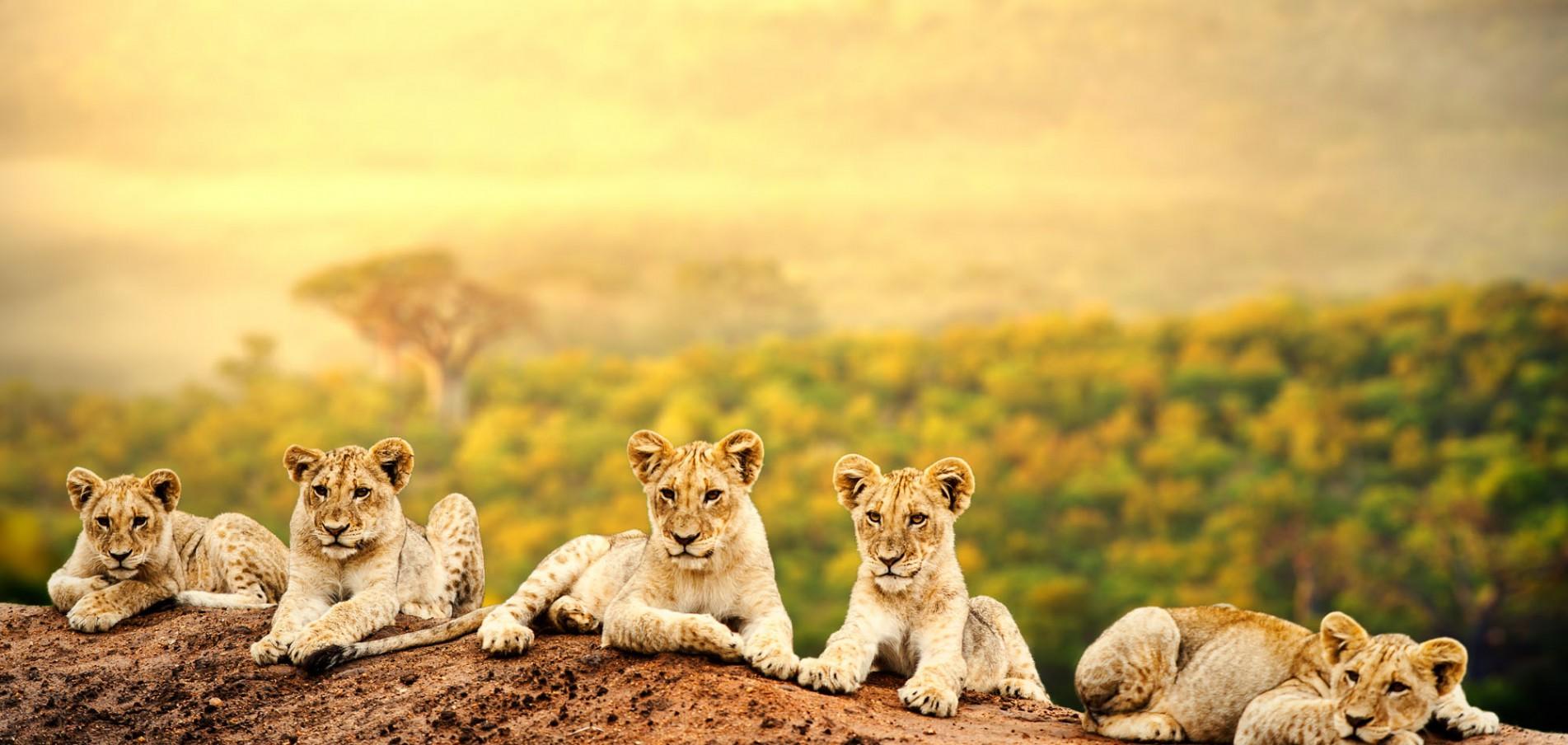 WILLKOMMEN IN SÜDAFRIKA ...das schönste Ende der Welt!