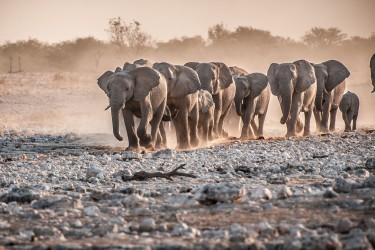 Incentive Namibia