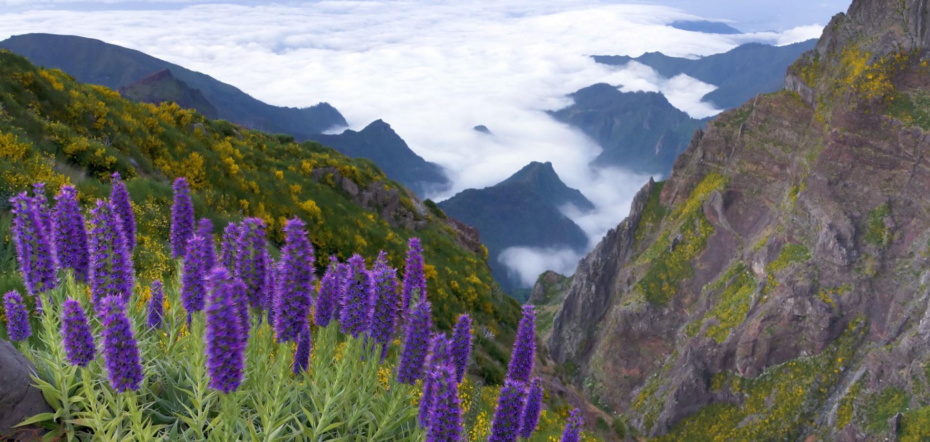 Madeira ...die Blumeninsel im Atlantik!