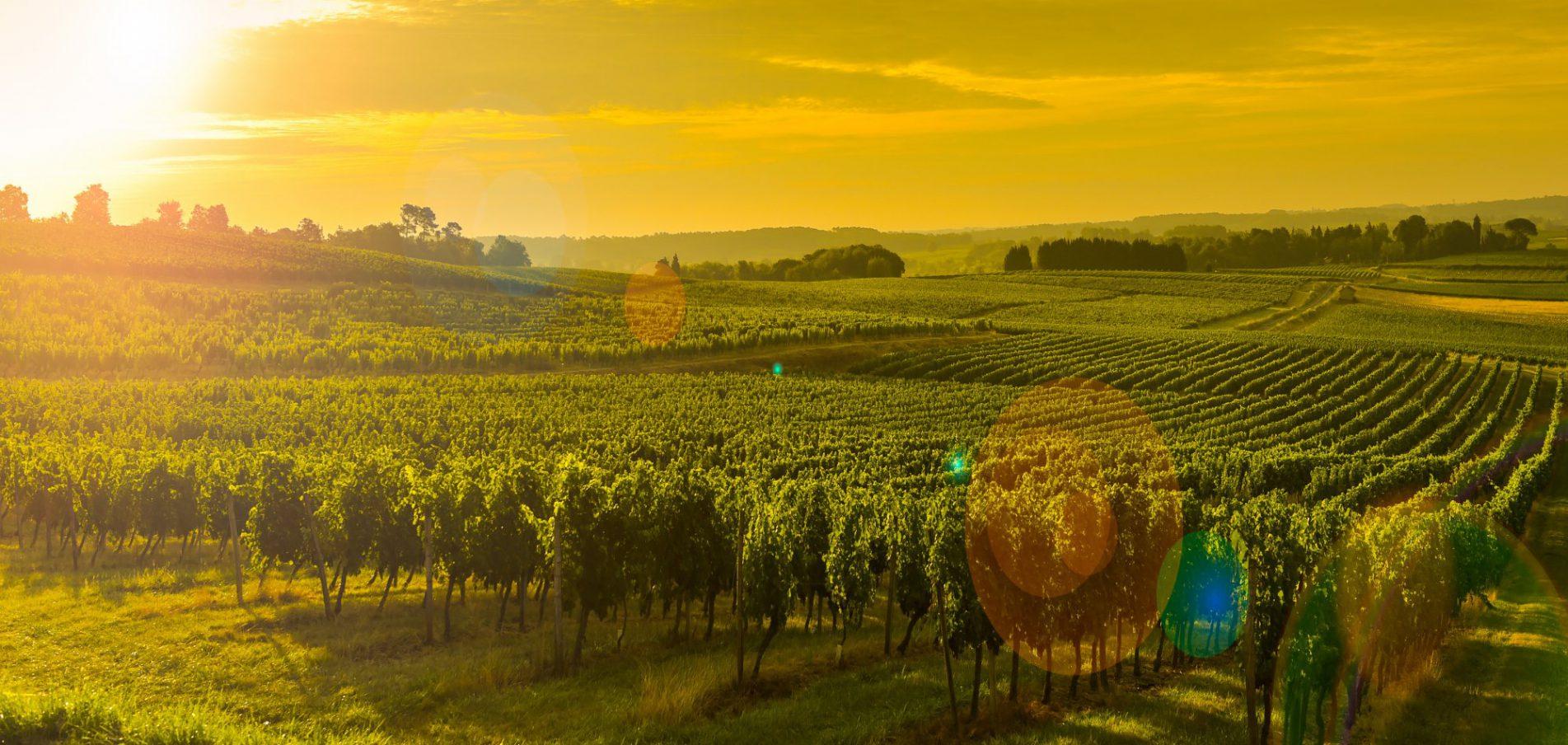 Die Welthauptstadt des Weins
