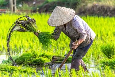 Incentive Vietnam