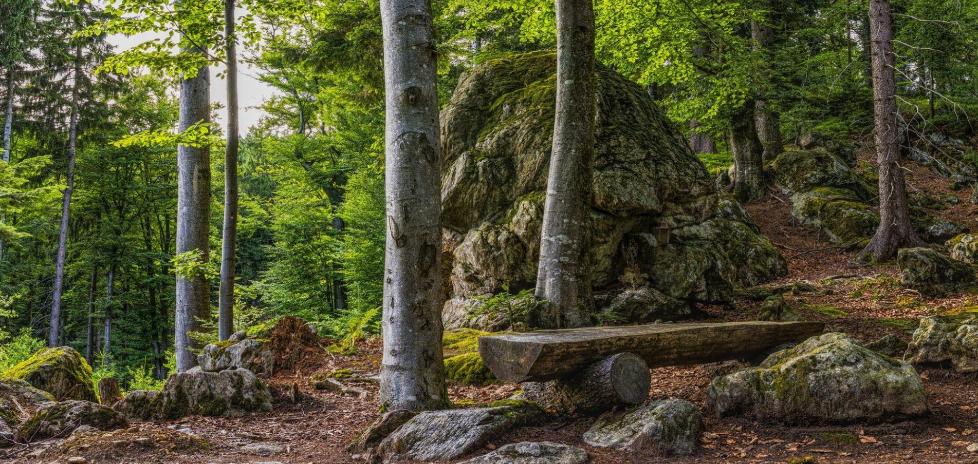 Willkommen im Bayerischen Wald ... mitten drin im Abenteuer!