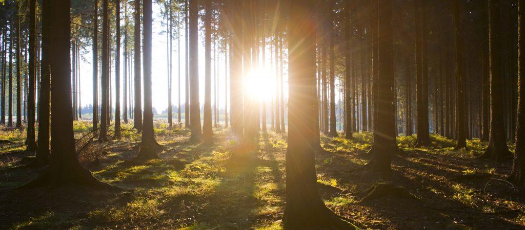 Sauerland-Waldroute go green