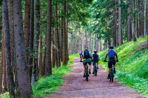forest-4366094_1920pixabay