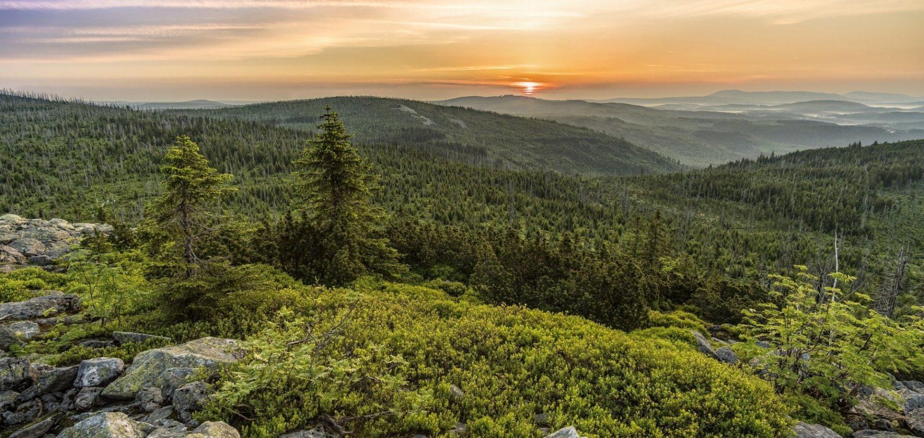 Willkommen im Bayerischen Wald ... der einzige Urwald Deutschlands!