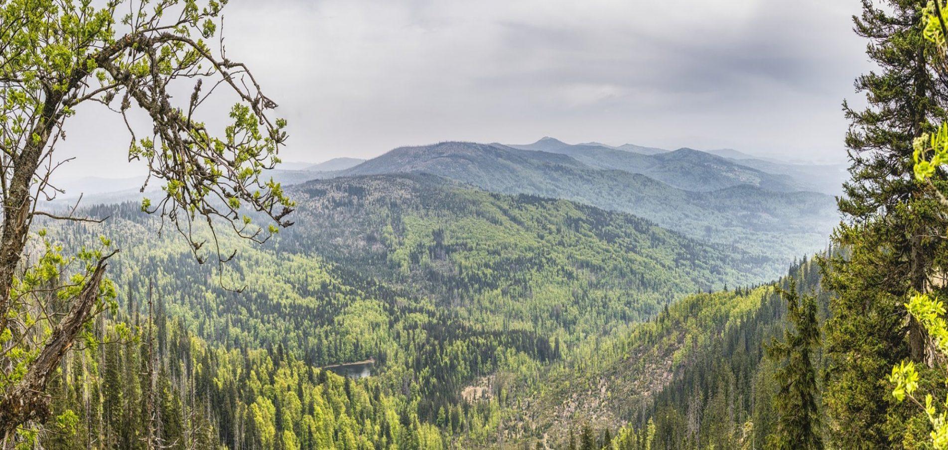 Willkommen im Bayerischen Wald ... der erste und älteste Nationalpark!